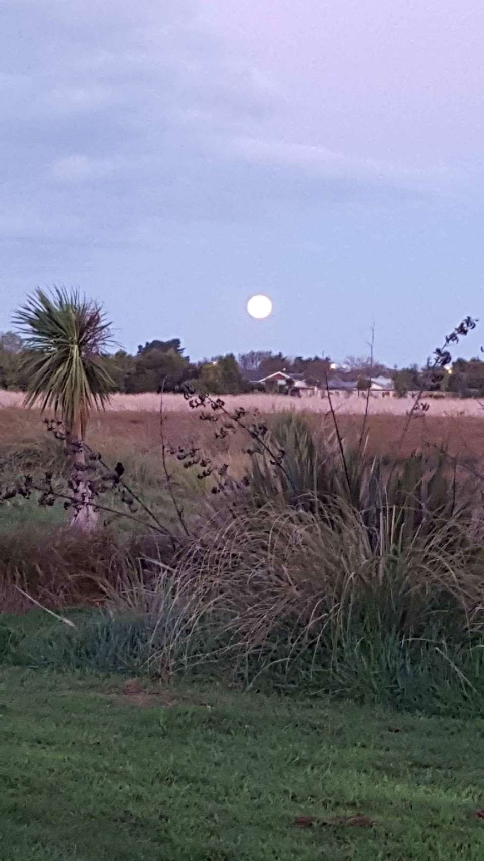 Beautiful, run around the Wetlands... check out that moon..