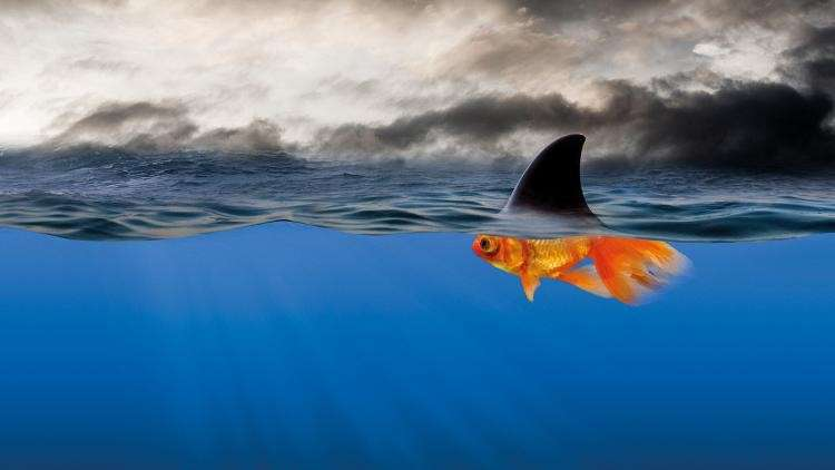 """I taught a class at the jail today and there was this moment.I was sharing the picture below. I began talking about how our children often present with behaviors that look like the shark, but if we look below the water, we will realize they are really just scared goldfish trying to have a need met. Their behaviors might communicate anger and hostility, but below the surface is fear and a hurting child. I further explained that it is our job as parents to stop parenting the shark fin, and look below the surface and meet the needs of the goldfish.One of the inmates raised her hand and said, """"I'm alot like that picture. I act all tough and mean, but I'm really just a scared fish. I wish when I was a kid, someone would have thought to look for the goldfish, instead of just seeing me as a shark""""May we all spend the day looking for the goldfish, instead of punishing the shark.- Stacey Gagnon"""